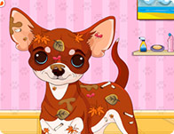 Chihuahua Puppy Care